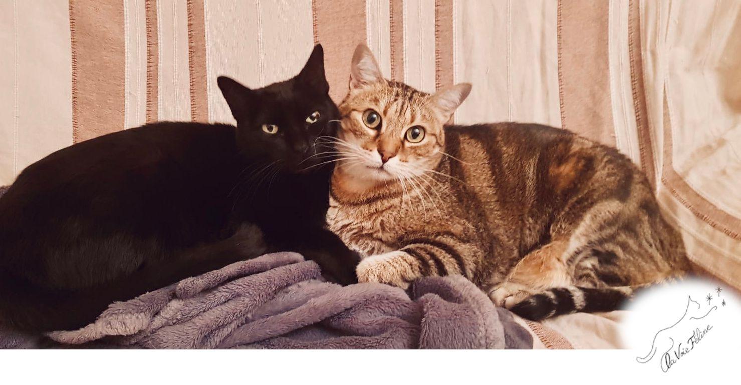 Chaussette et Mickey - Adopter un chat – Ile de France