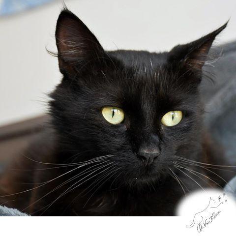 Blacky - Adopter un chat – Ile de France