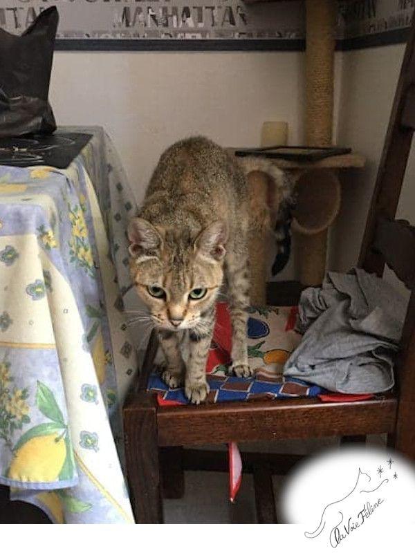 Bella - Adopter un chat – Ile de France