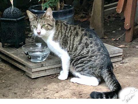 Aimé - Adopter un chat – Ile de France