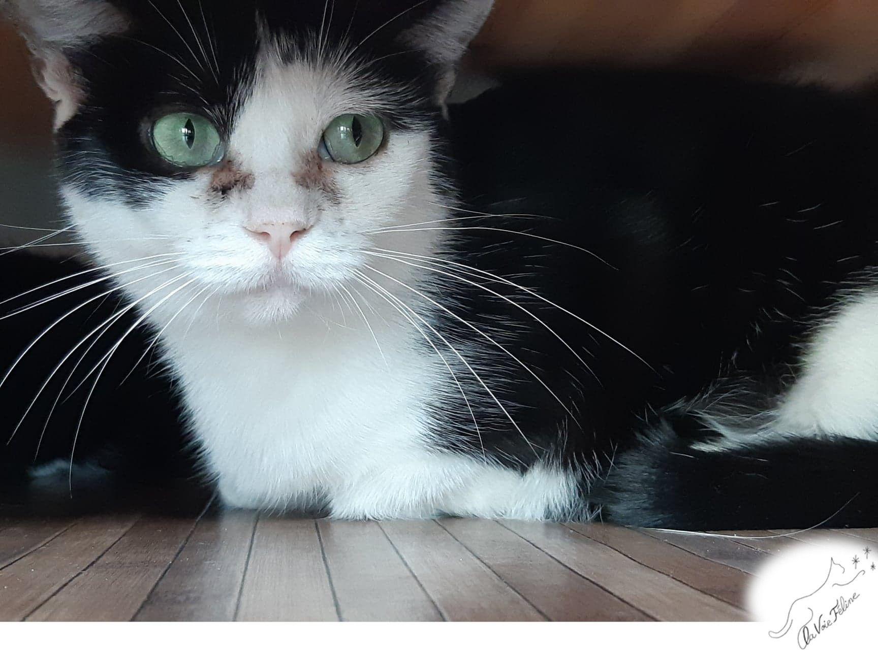 Emeraude - Adopter un chat – Ile de France