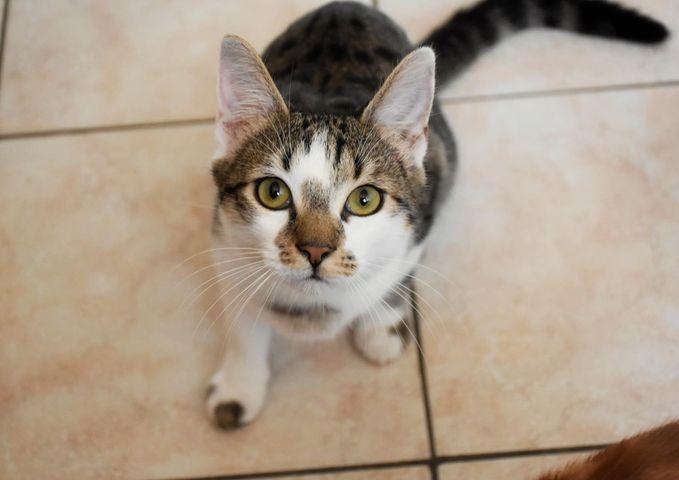 Cumin - Adopter un chat – Ile de France