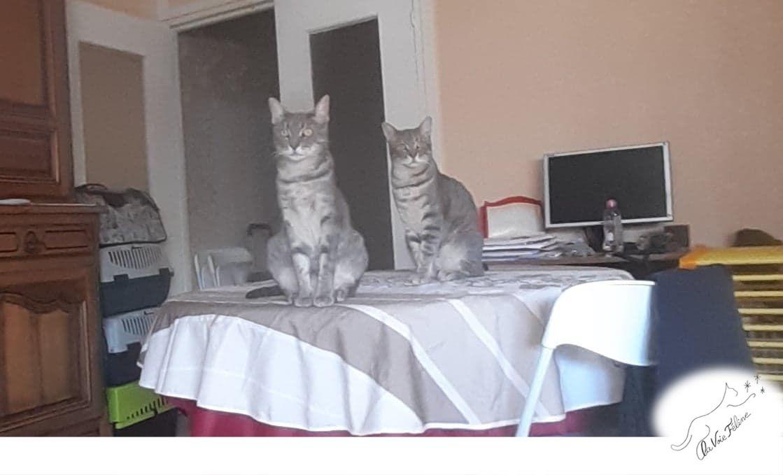 Sophie ou Grisou - Adopter un chat – Ile de France