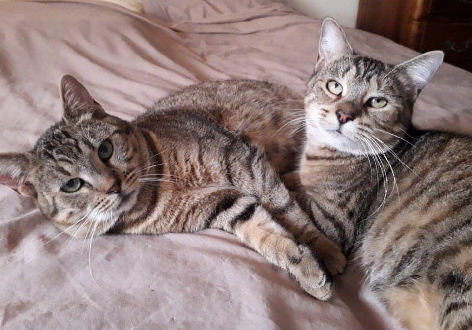 Falbala et Reinette  - Adopter un chat – Ile de France
