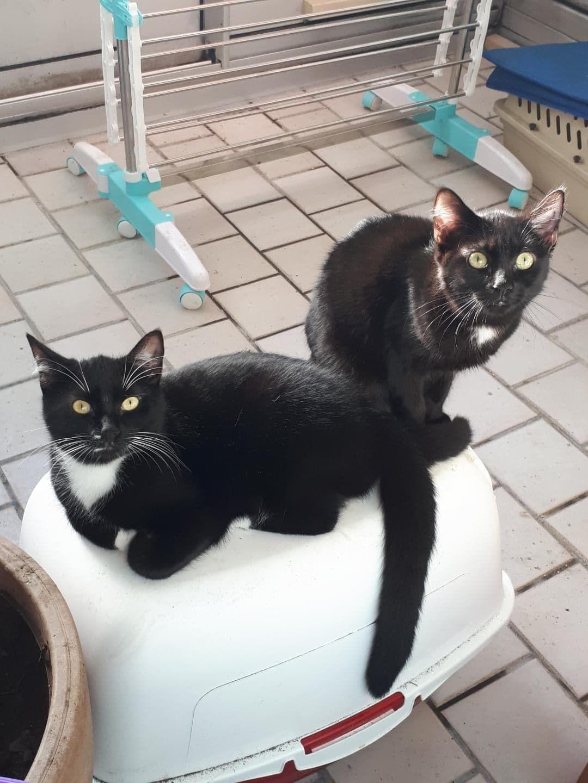 Pavolva et Isadora - Adopter un chat – Ile de France