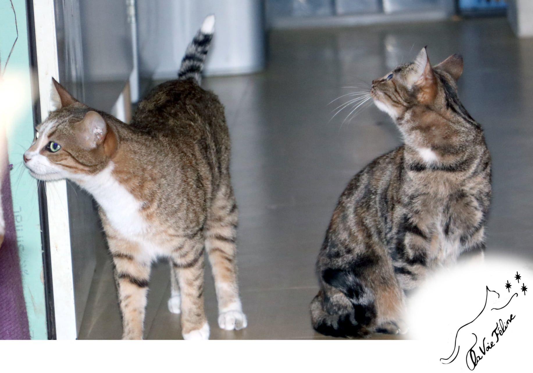 Randy et Enora - Adopter un chat – Ile de France