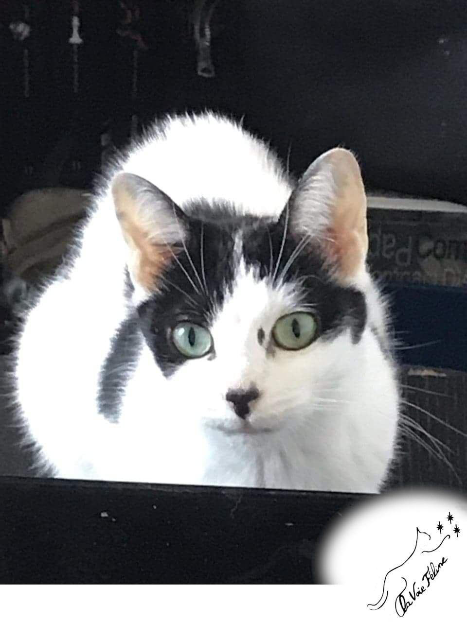 Maya <3 - Adopter un chat – Ile de France