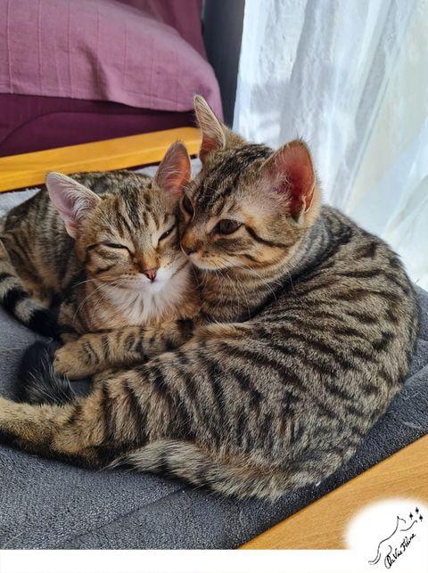 Pudding et Phoebe - Adopter un chat – Ile de France
