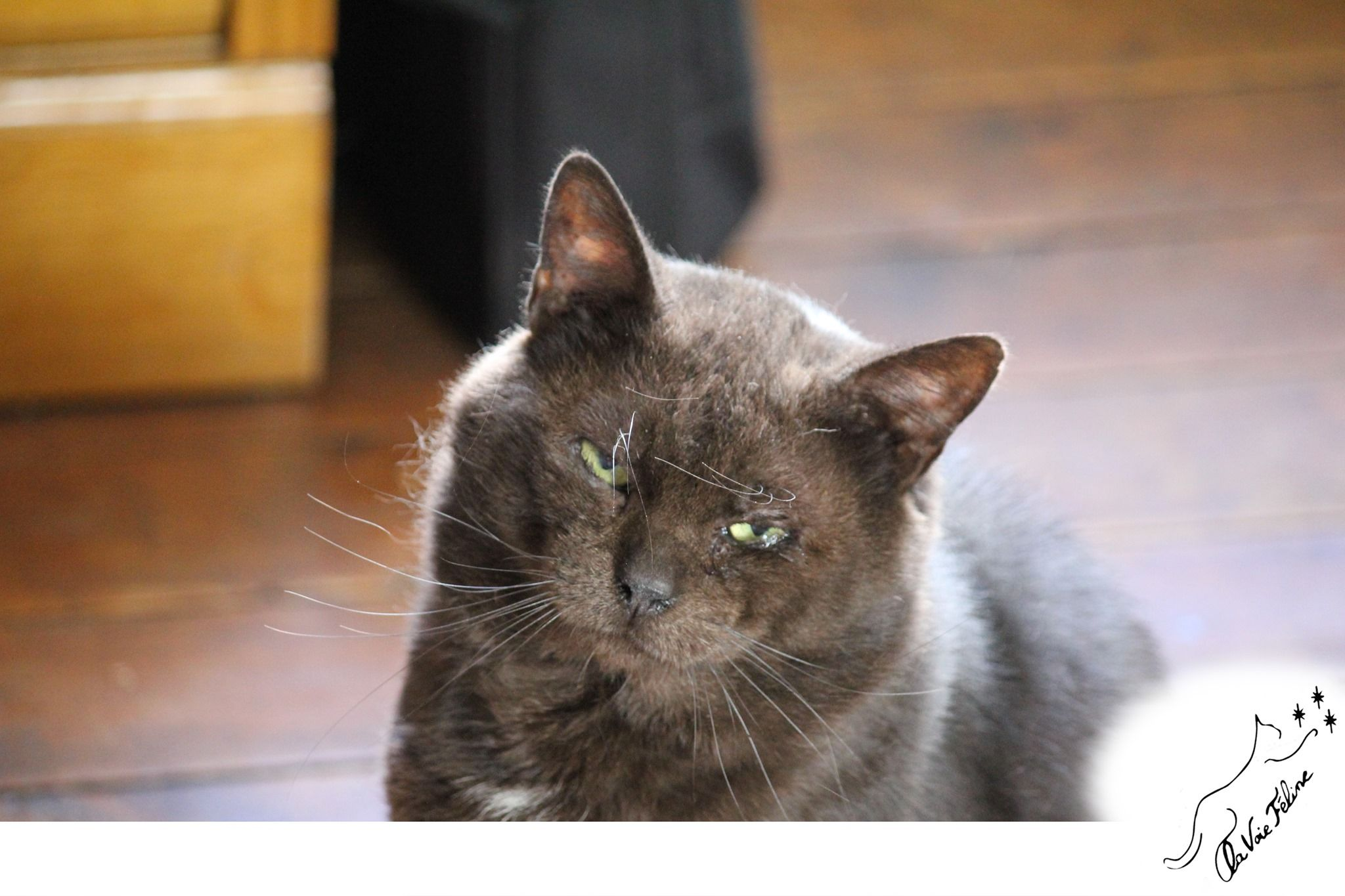 Prince - Adopter un chat – Ile de France
