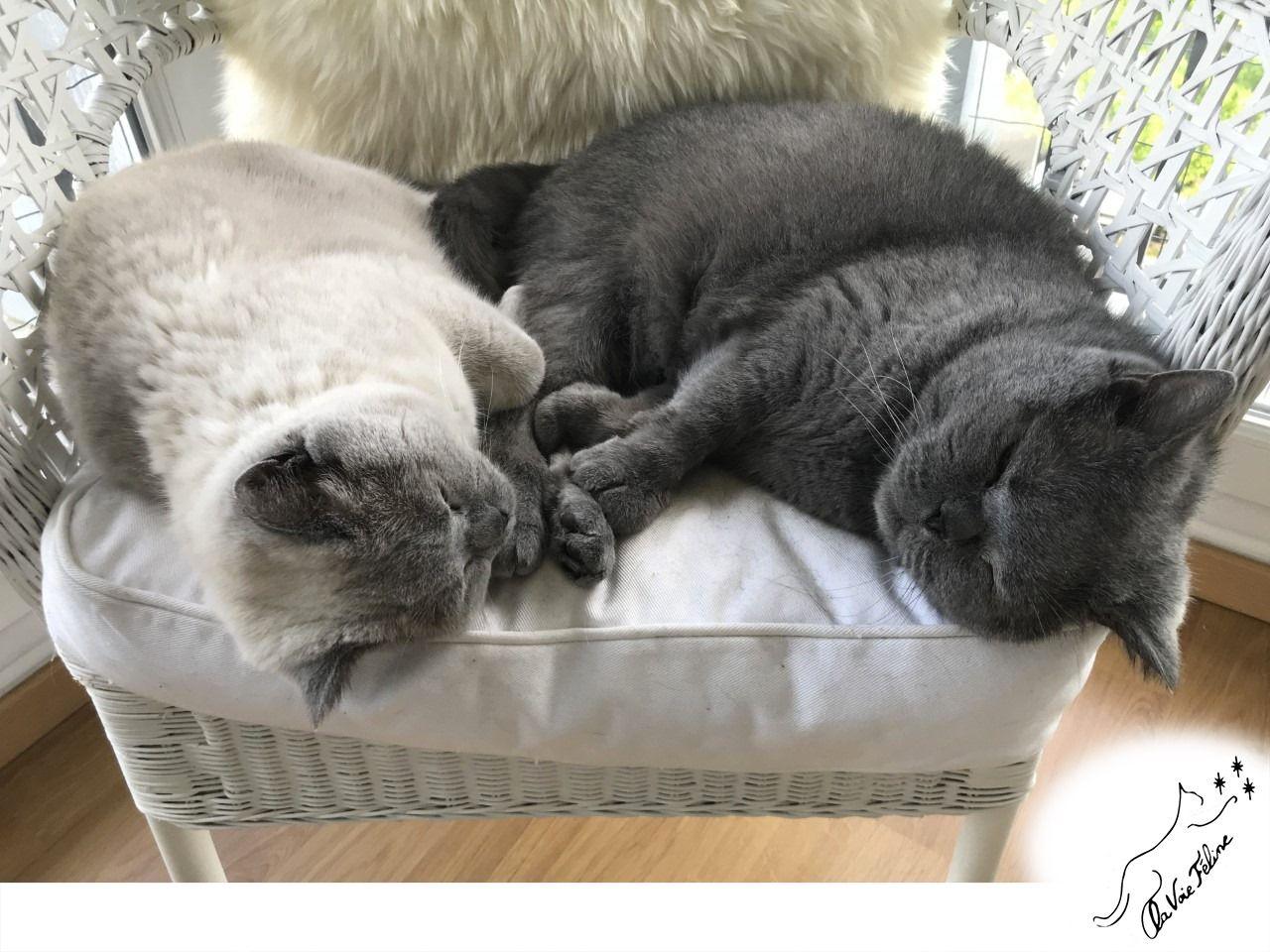 Léonard et Marie - Adopter un chat – Ile de France