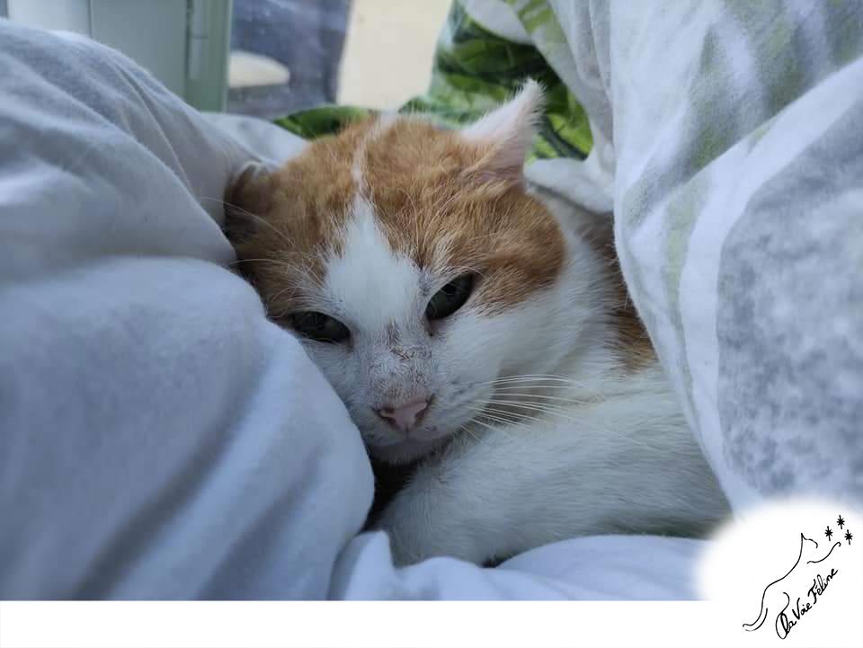 Caramel - Adopter un chat – Ile de France