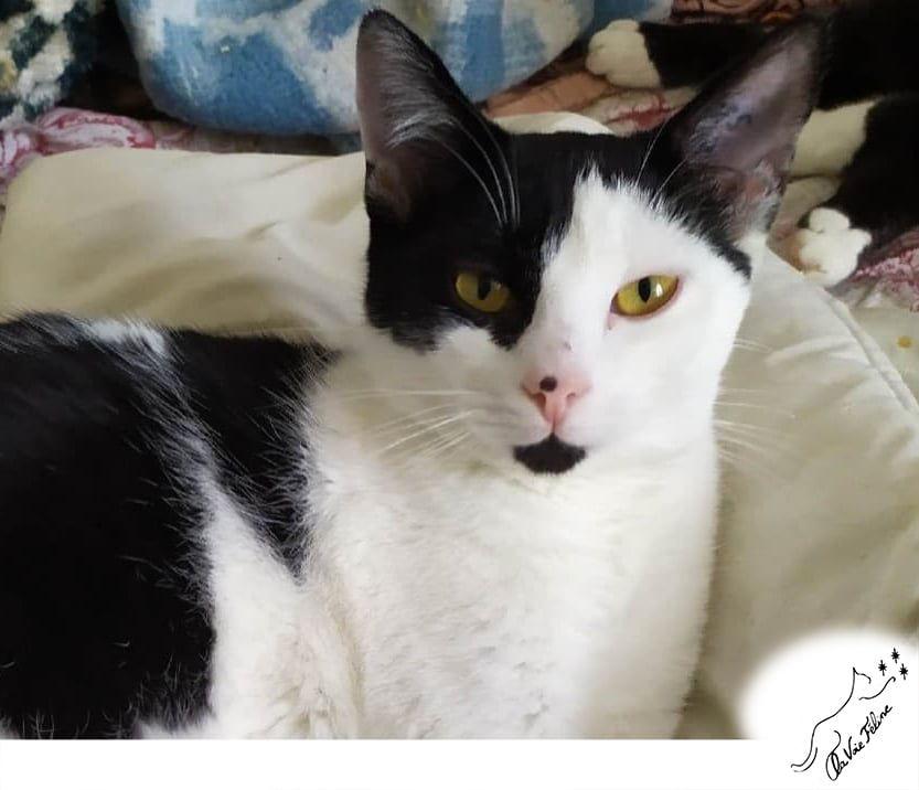 Ivan - Adopter un chat – Ile de France