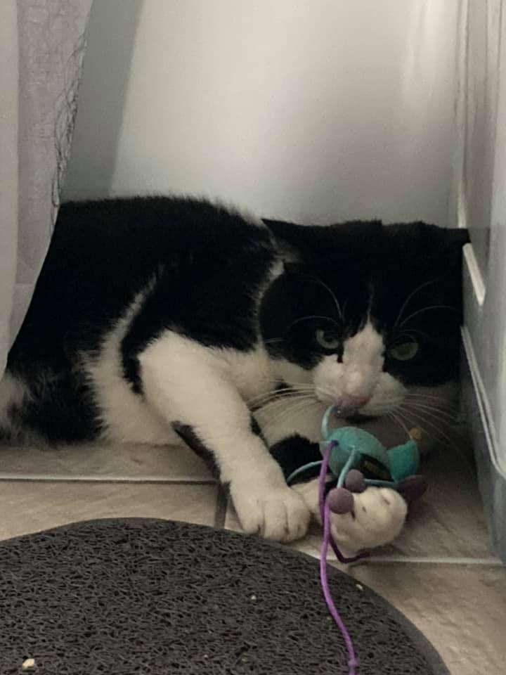Skittle - Adopter un chat – Ile de France