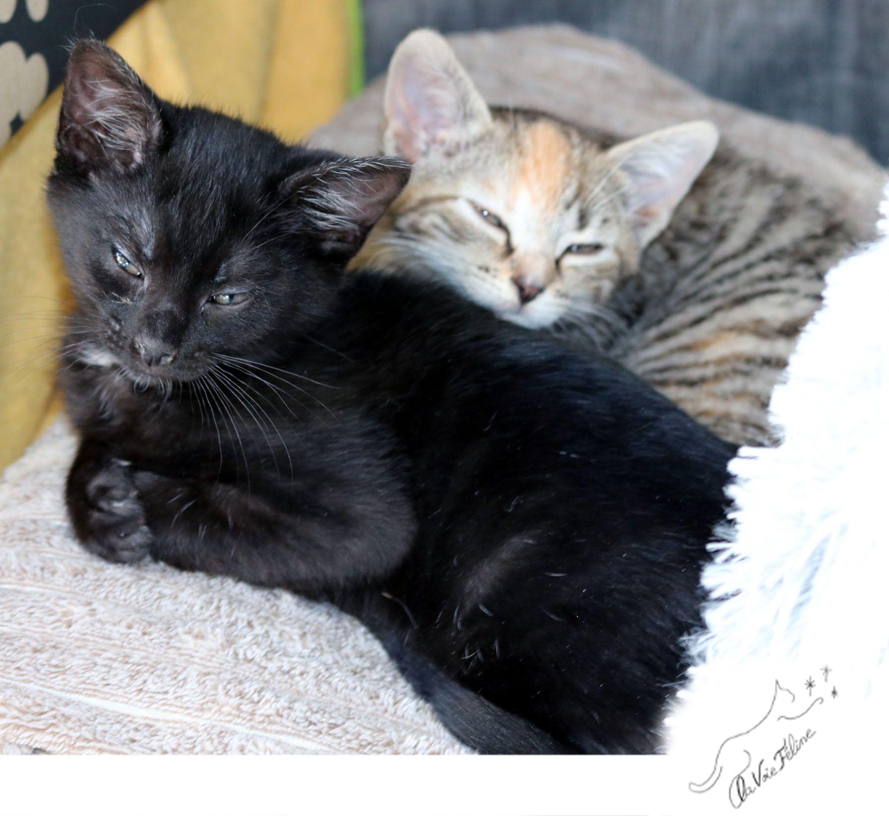 Arya et Stark - Adopter un chat – Ile de France