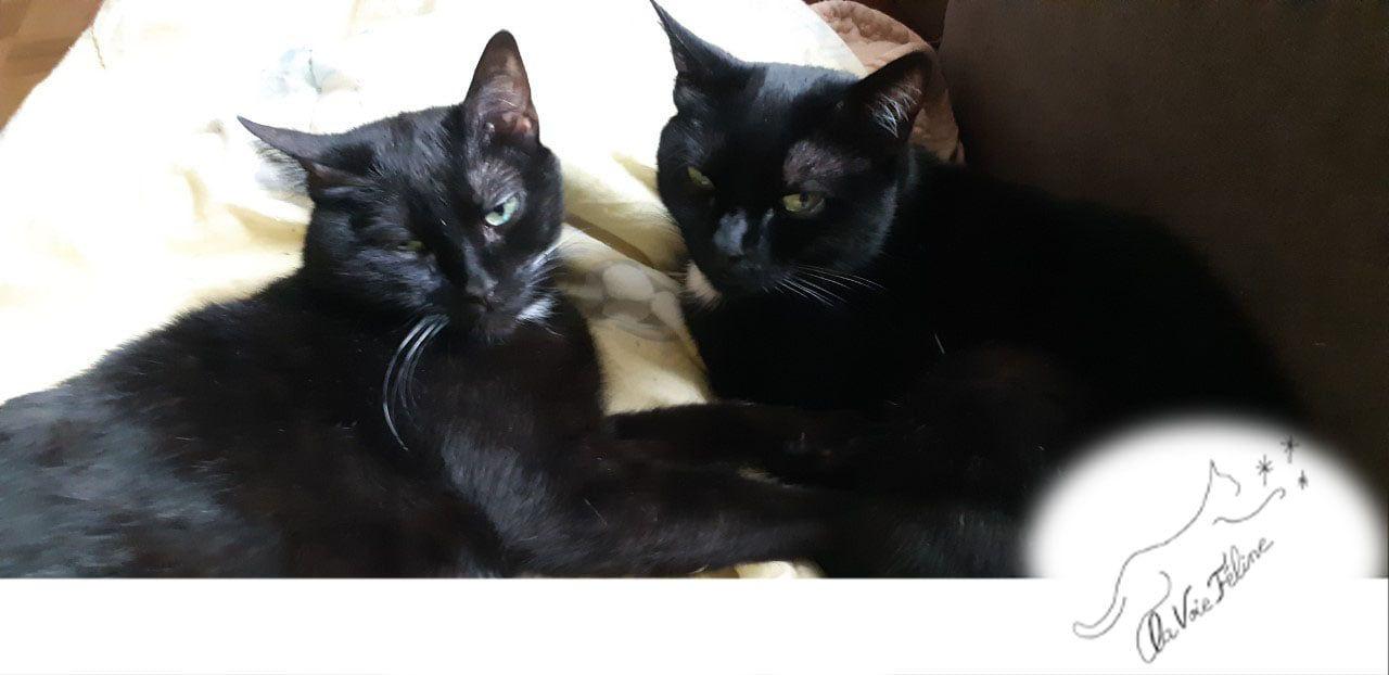 Puka et kalinou - Adopter un chat – Ile de France