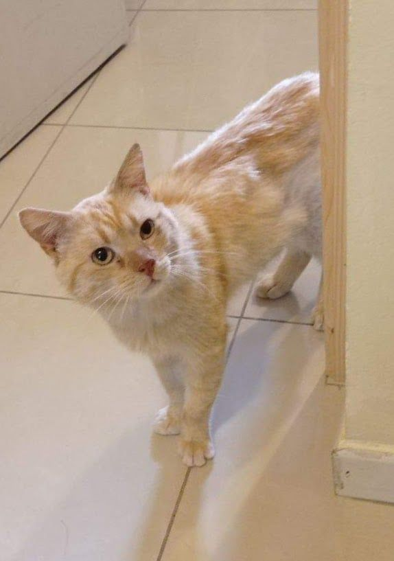 🐾Barbidou - Adopter un chat – Ile de France