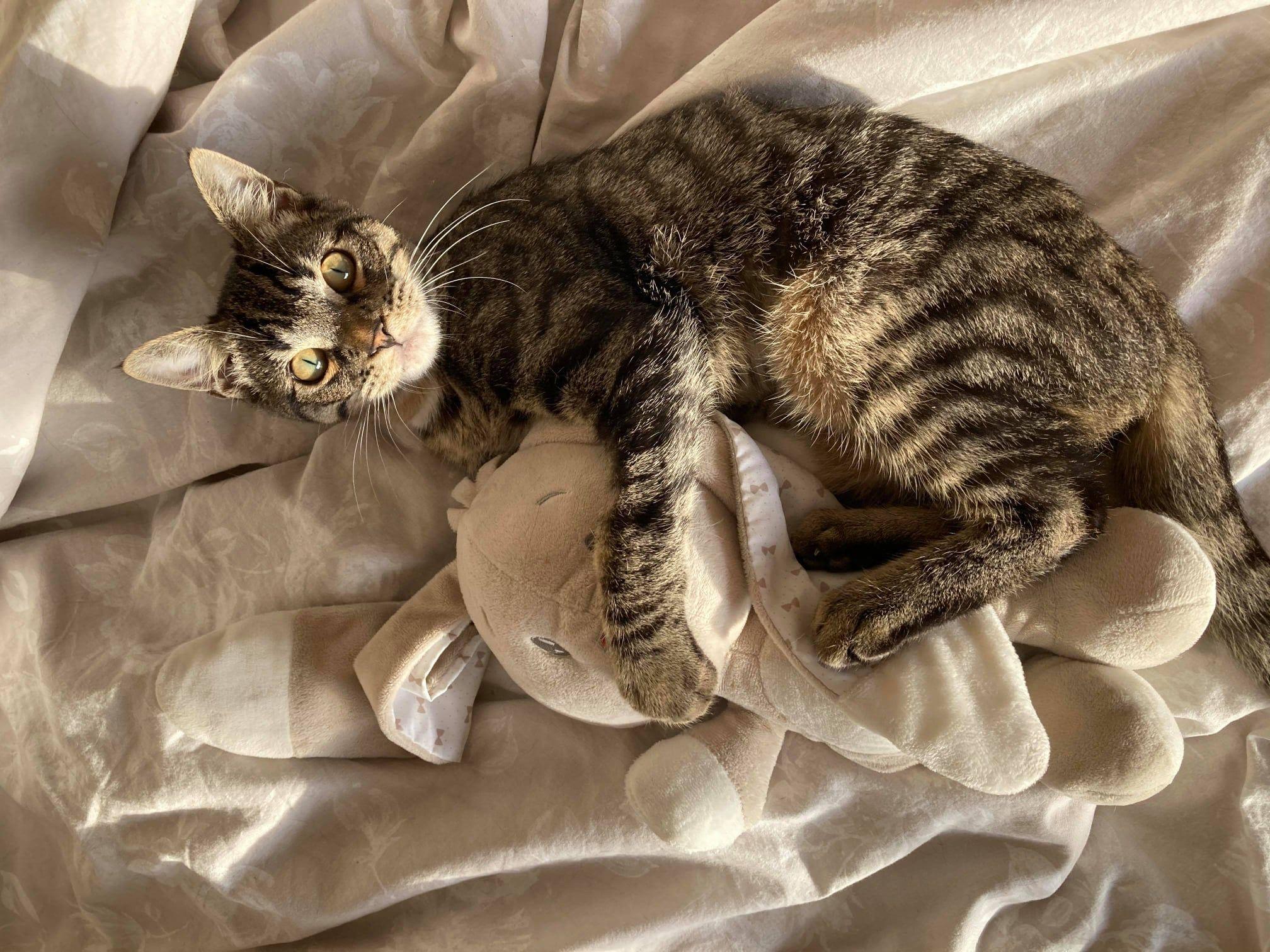 Gasparou - Adopter un chat – Ile de France