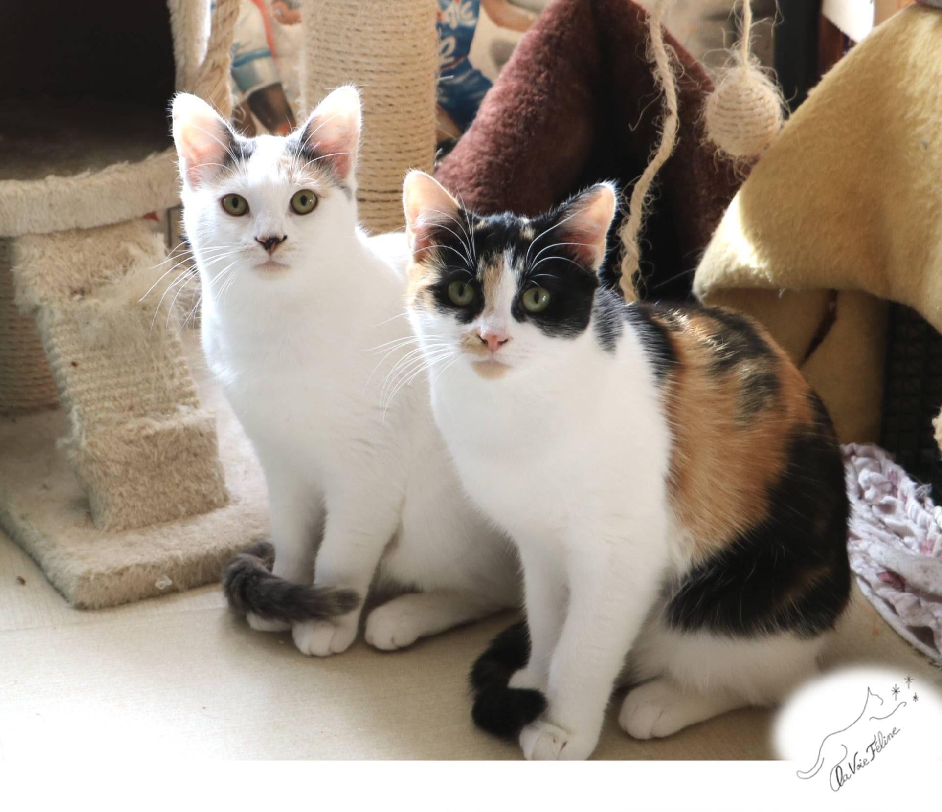 Aryana et Syrine  - Adopter un chat – Ile de France