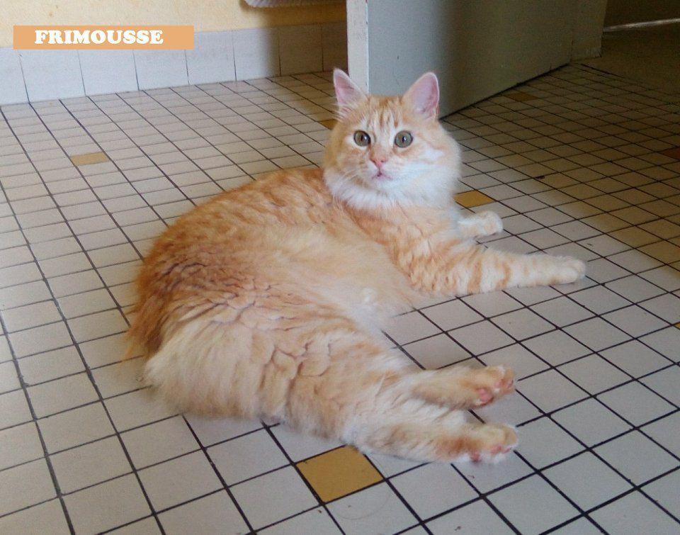 FRIMOUSSE - Adopter un chat – Ile de France