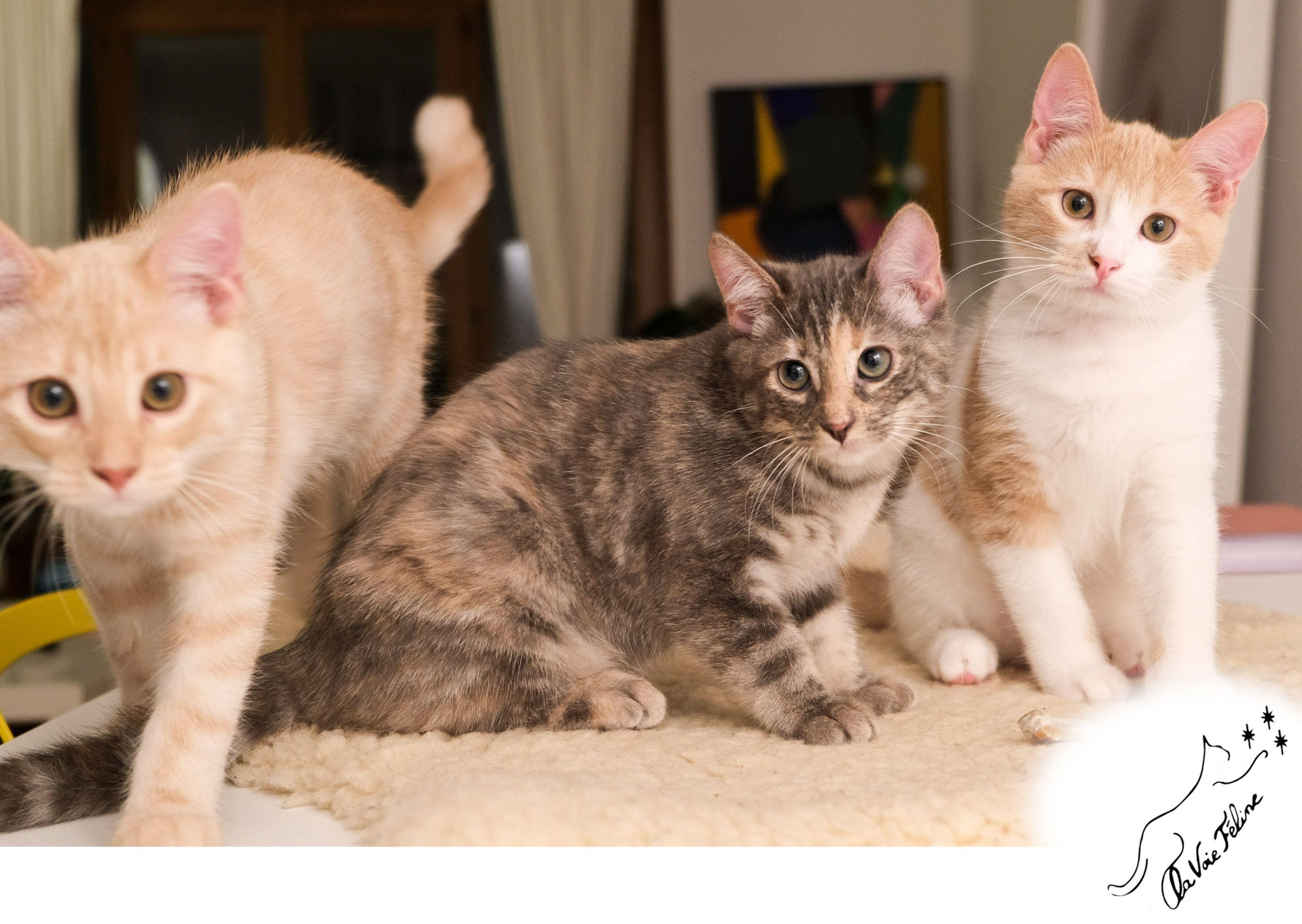 Sablé et Noisette - Adopter un chat – Ile de France