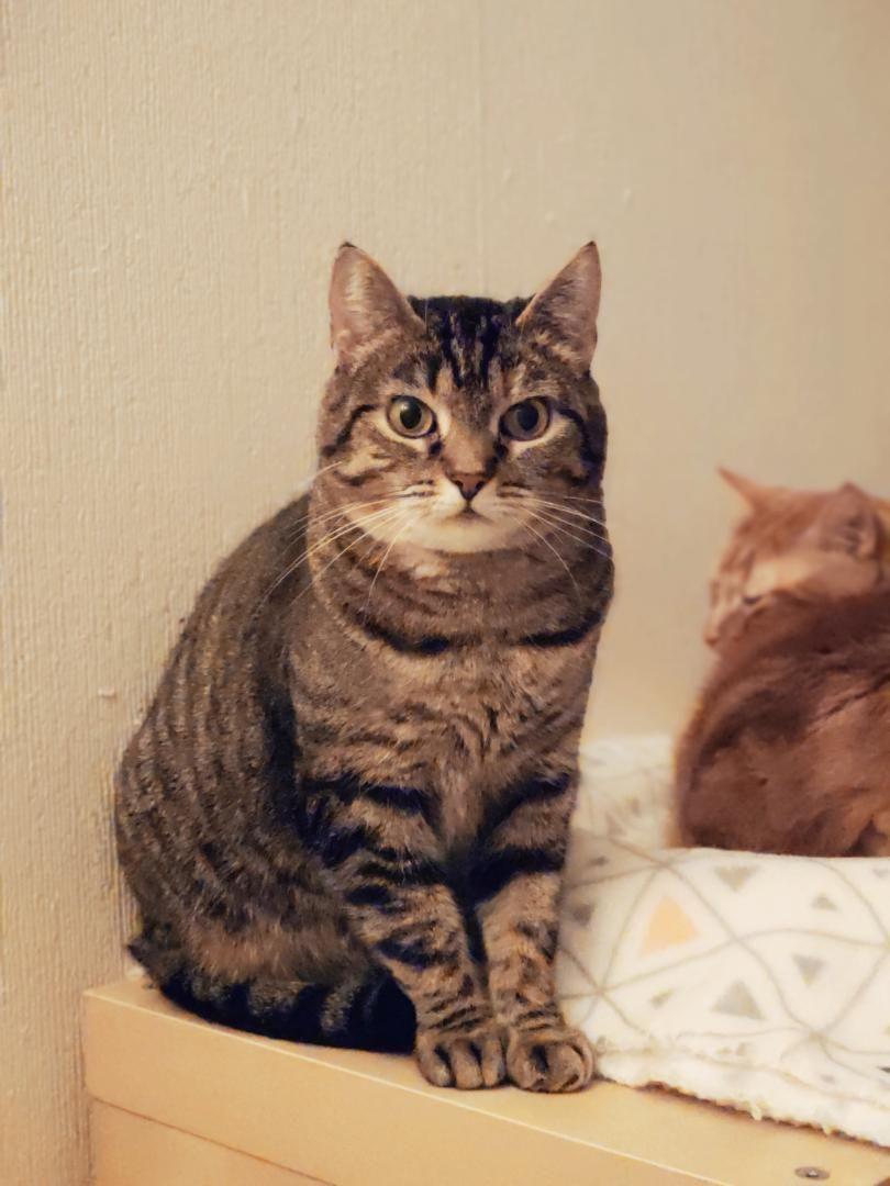 Clochette - Adopter un chat – Ile de France