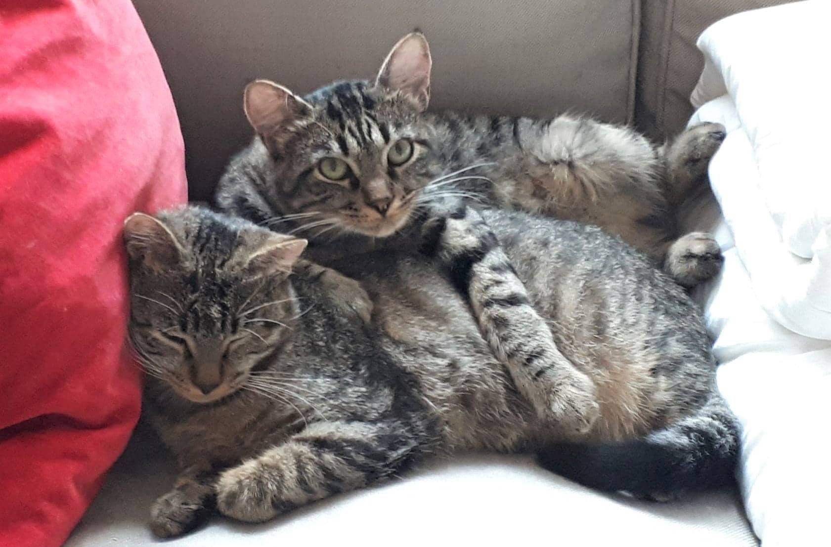 Loulou et Minibus - Adopter un chat – Ile de France