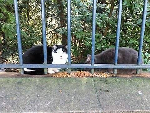 Grigri et Loulou - Adopter un chat – Ile de France