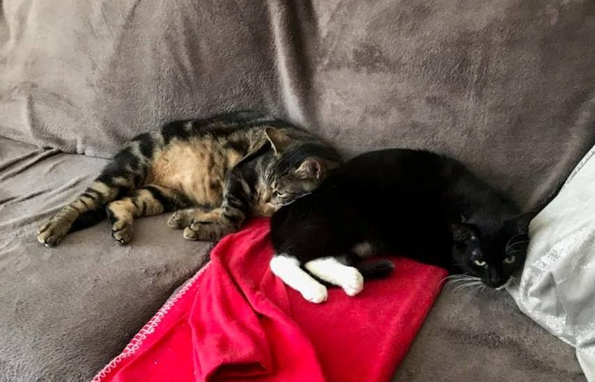 Charly et Olivia - Adopter un chat – Ile de France
