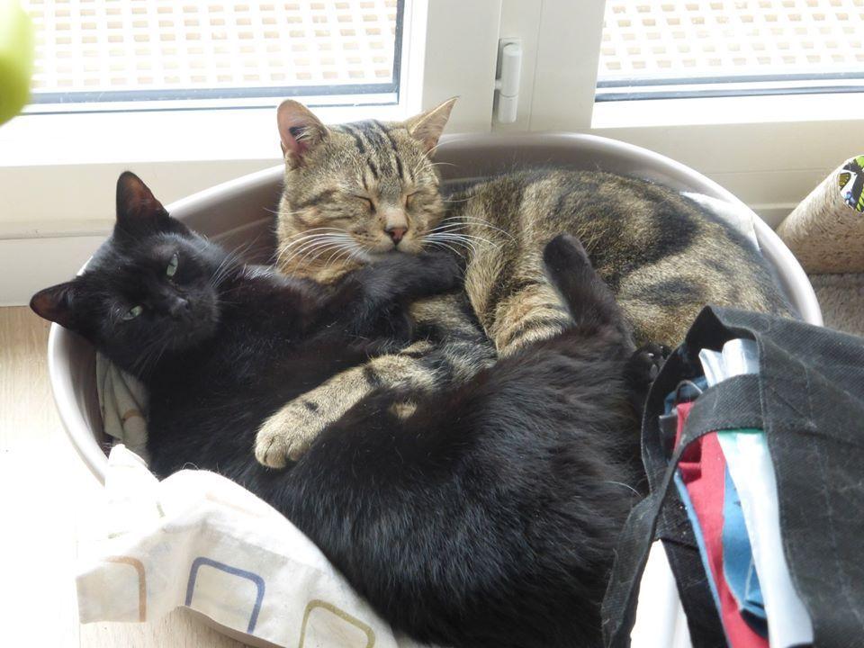 Kenji et Minouche - Adopter un chat – Ile de France