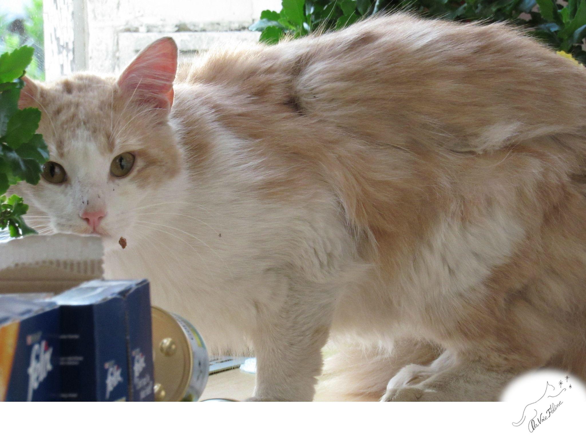 Copycat - Adopter un chat – Ile de France