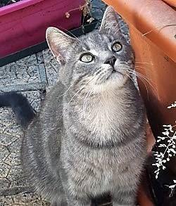 Winnie - Adopter un chat – Ile de France