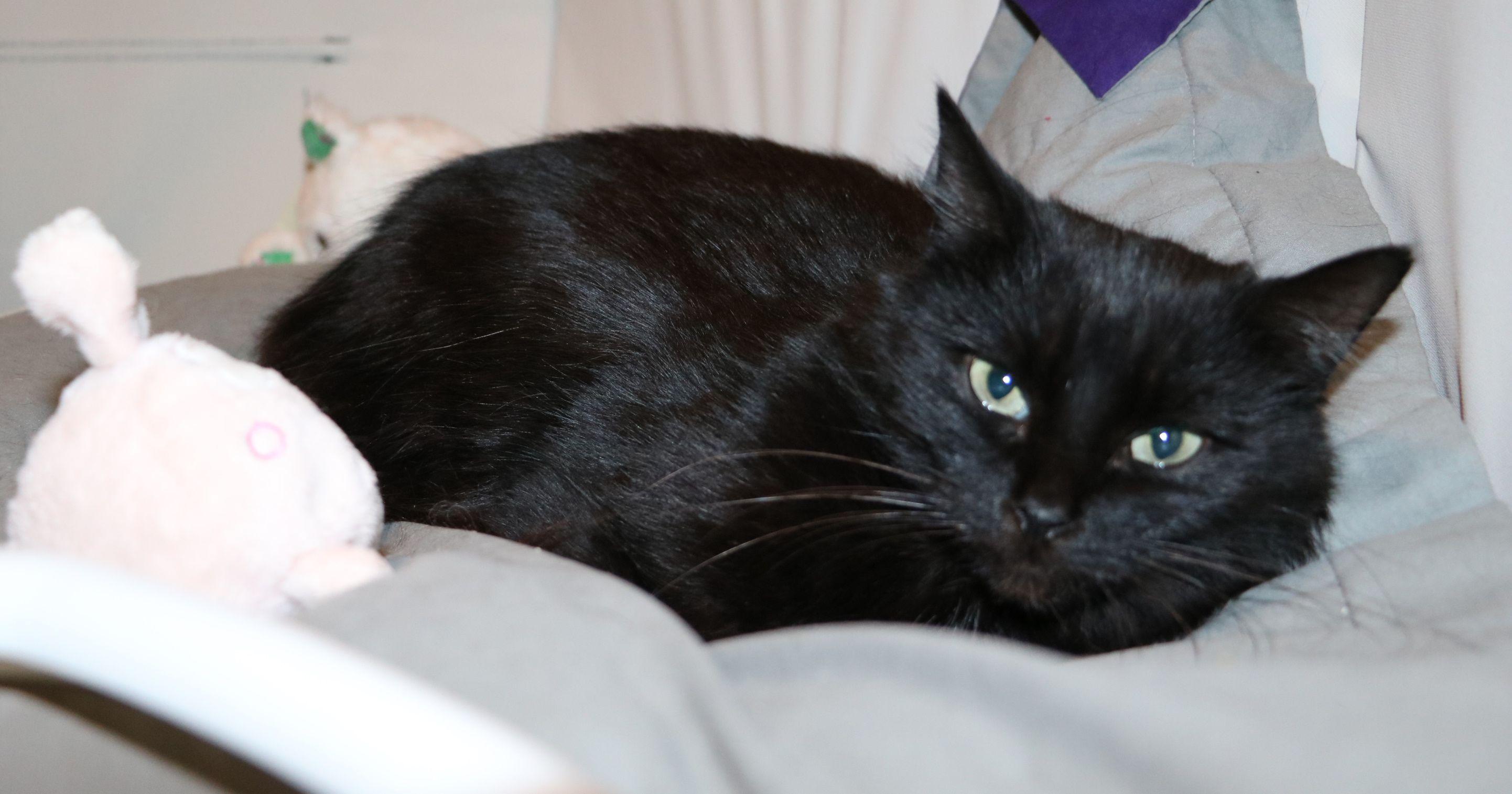 Anna - Adopter un chat – Ile de France