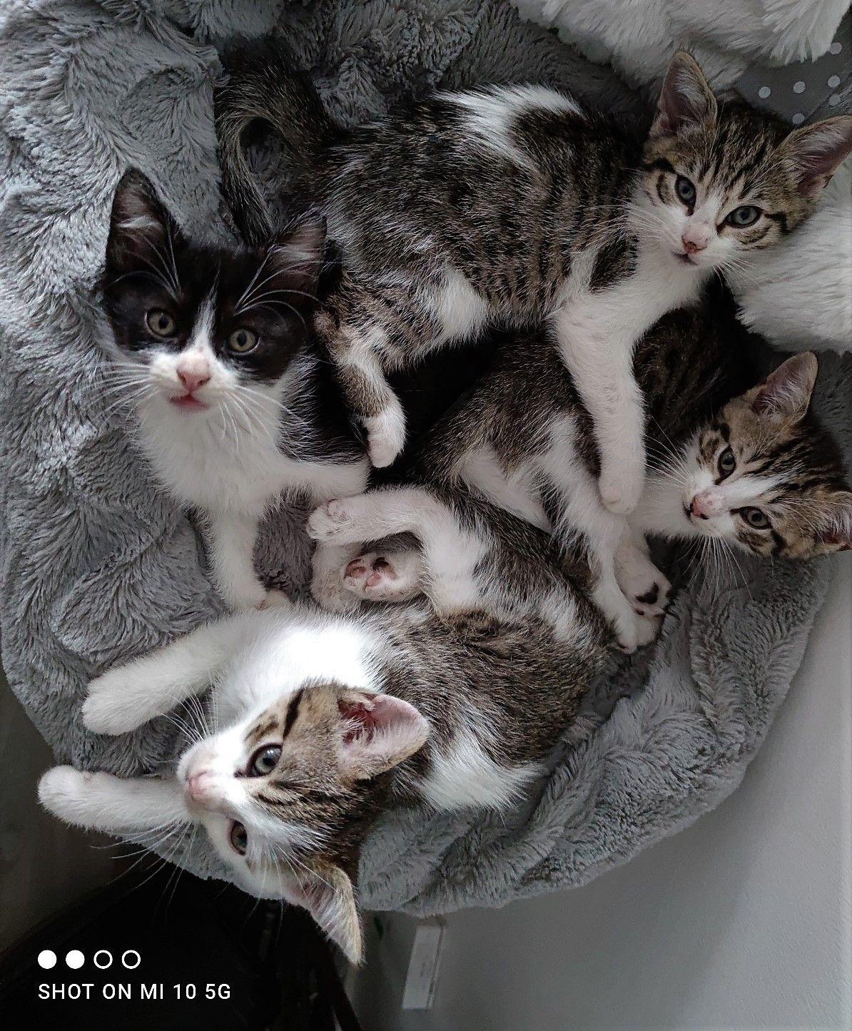 🐾Zazou, Twix, Tic et Tac - Adopter un chat – Ile de France