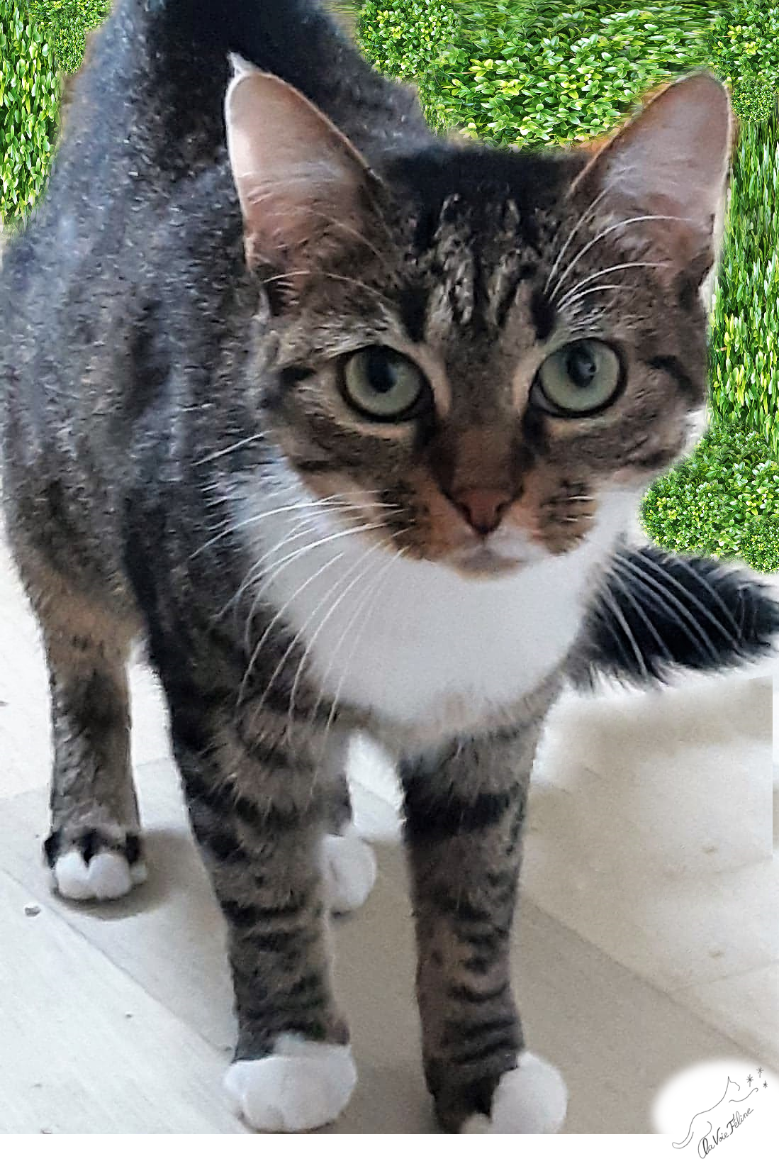 Nanette - Adopter un chat – Ile de France