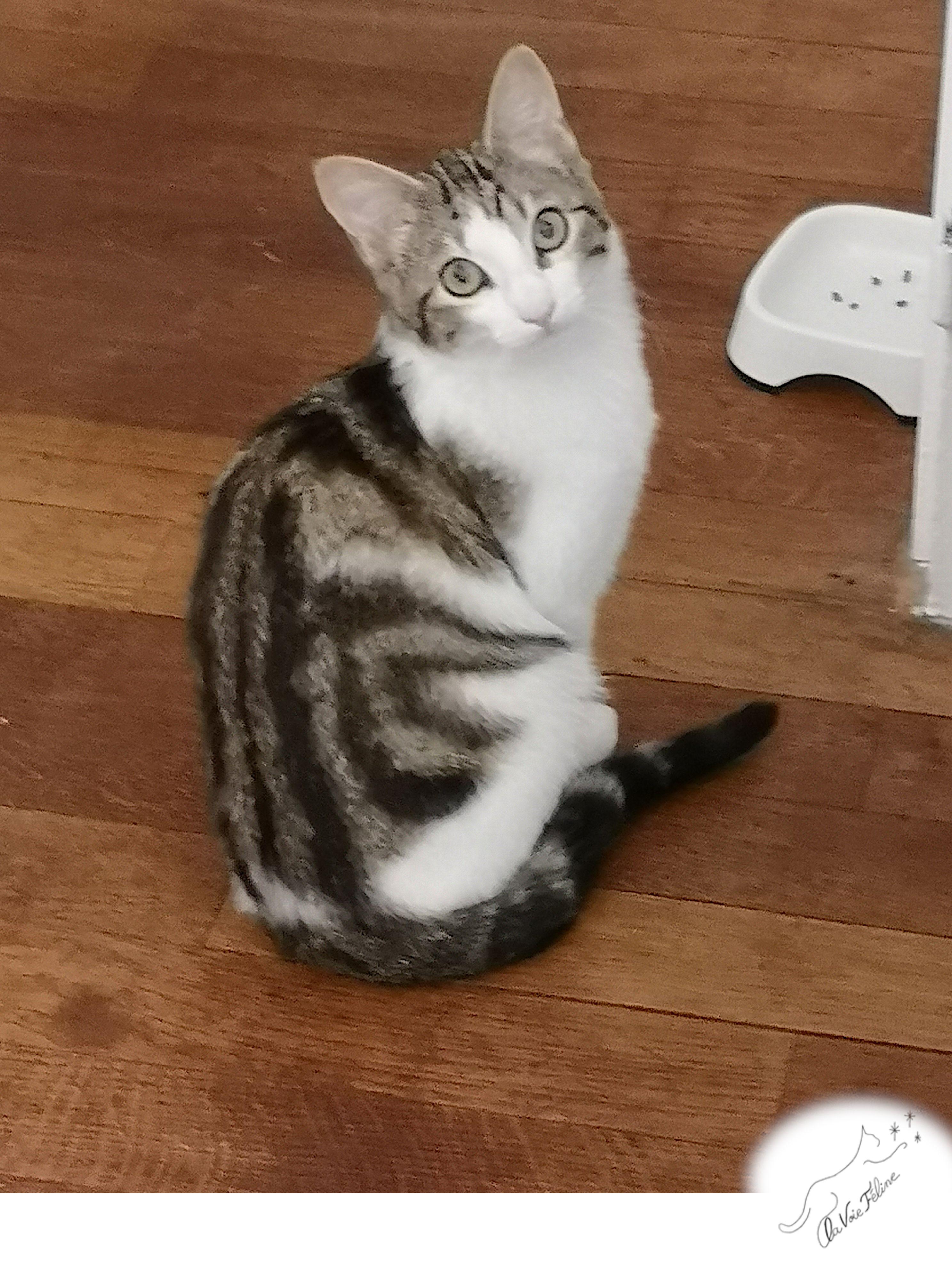Alphonse - Adopter un chat – Ile de France