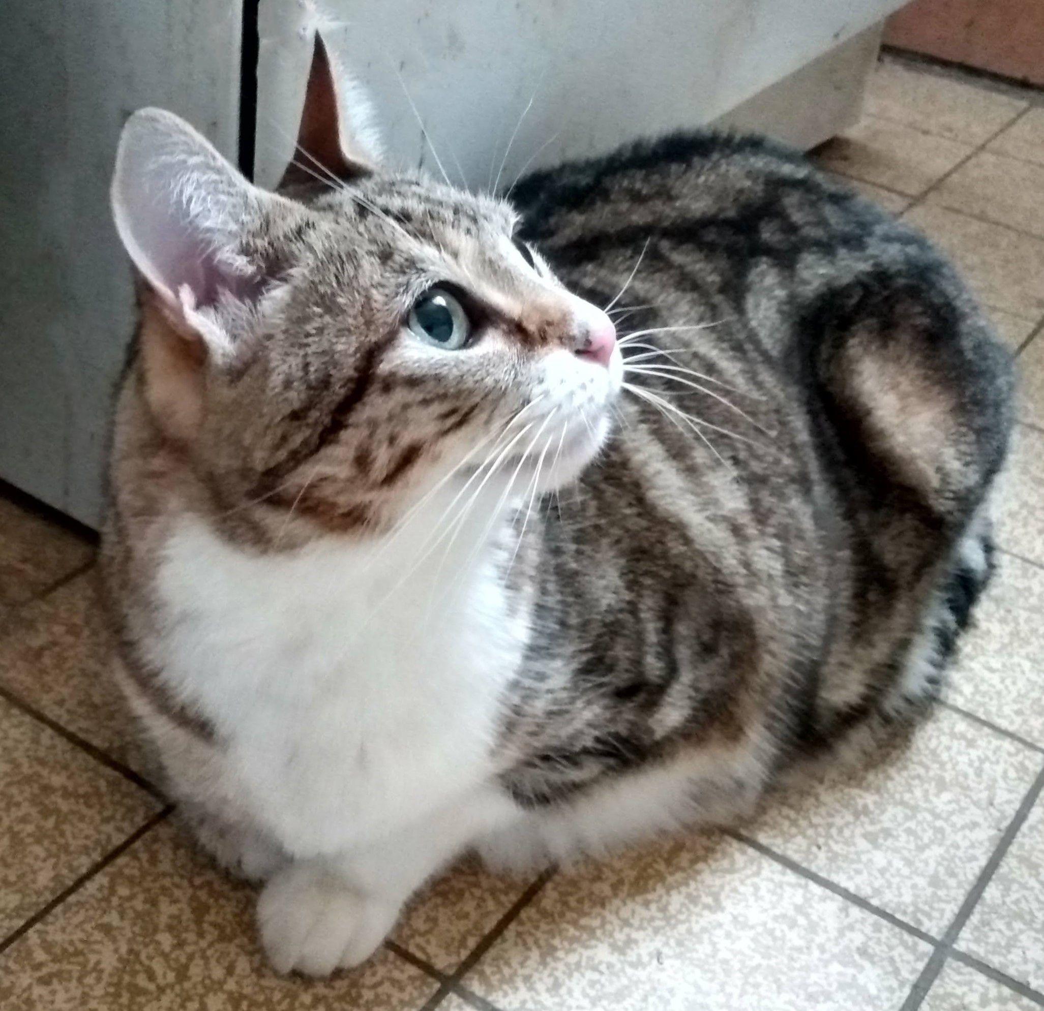 Isis - Adopter un chat – Ile de France