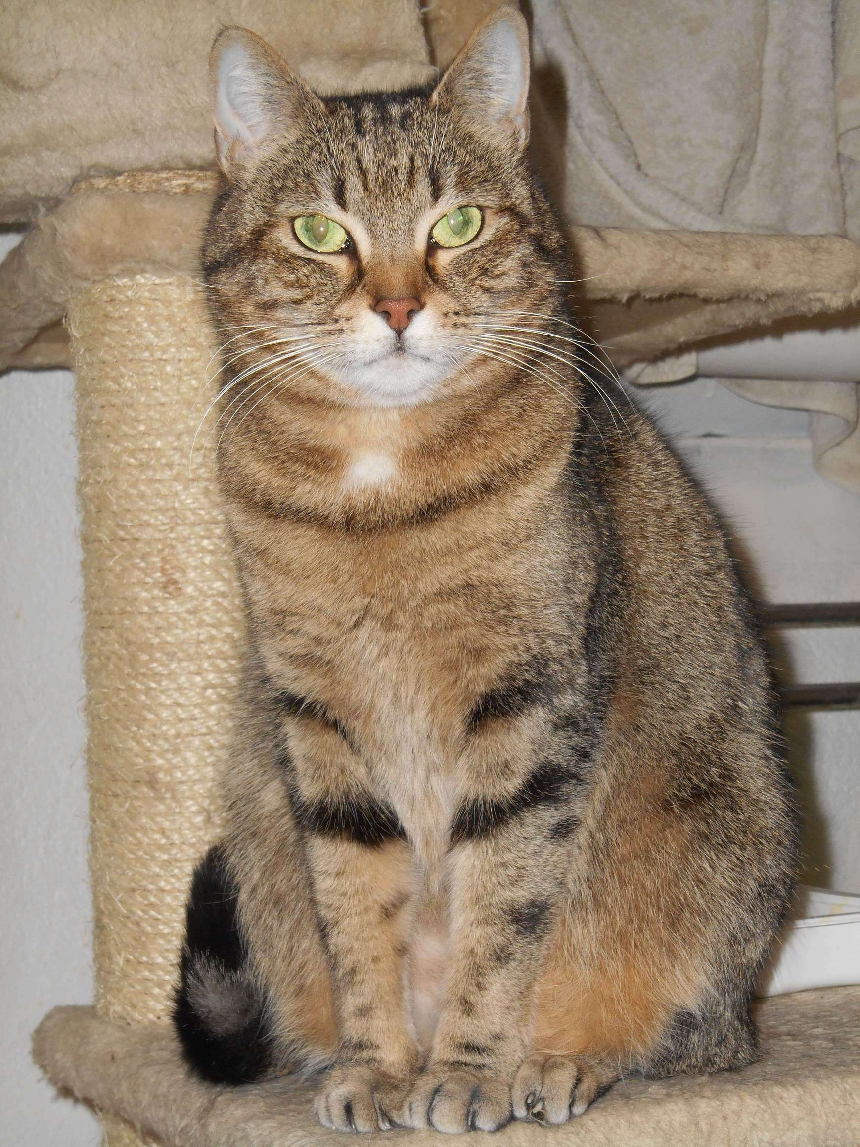 Maddy - Adopter un chat – Ile de France
