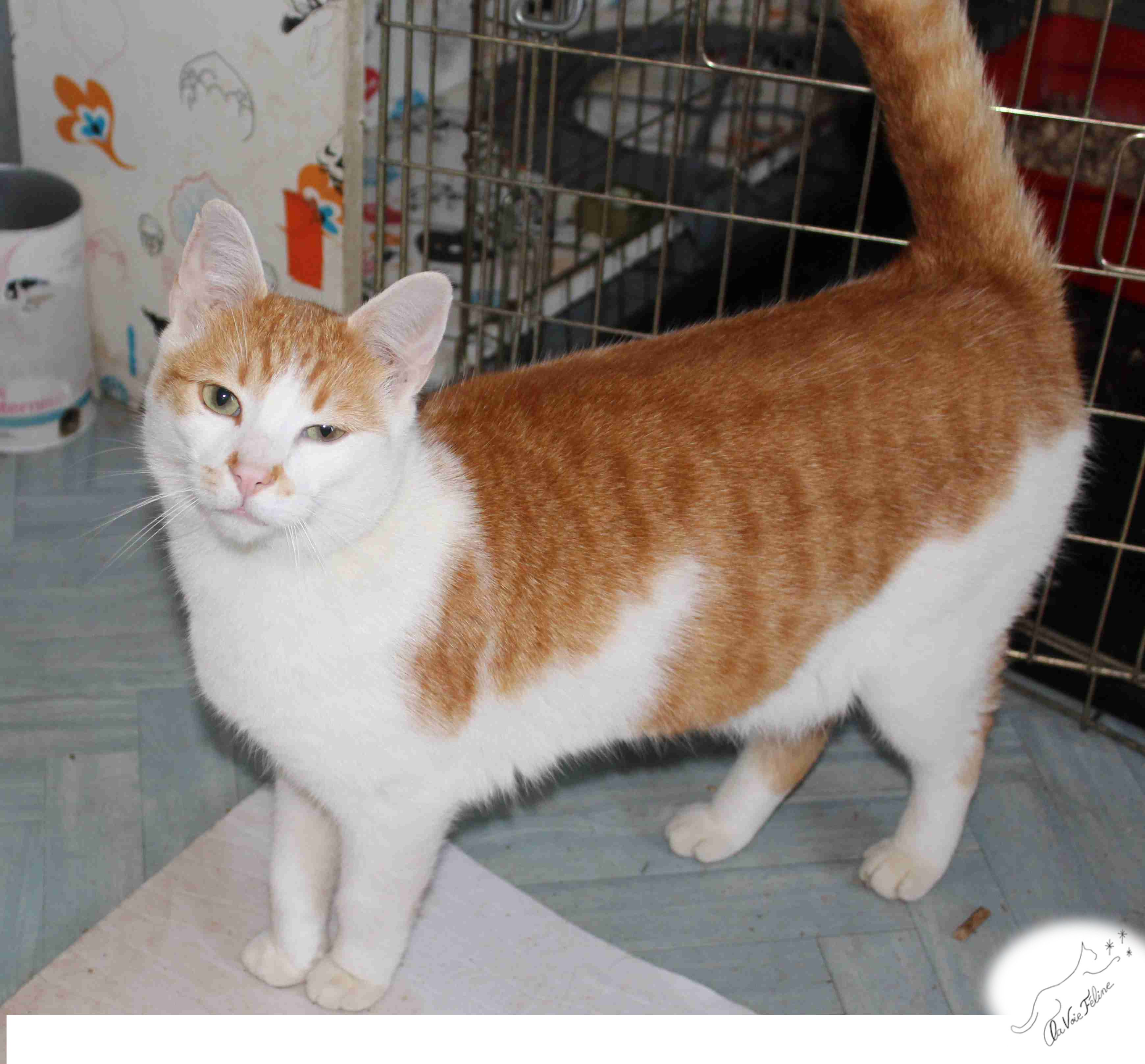 Ronsard - Adopter un chat – Ile de France