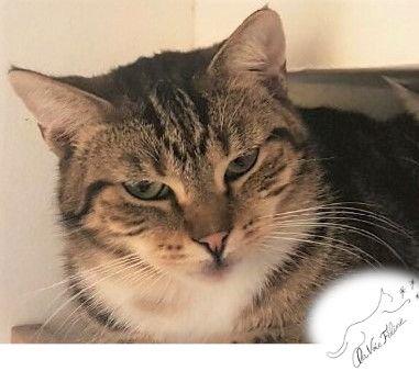 Tigrou - Adopter un chat – Ile de France