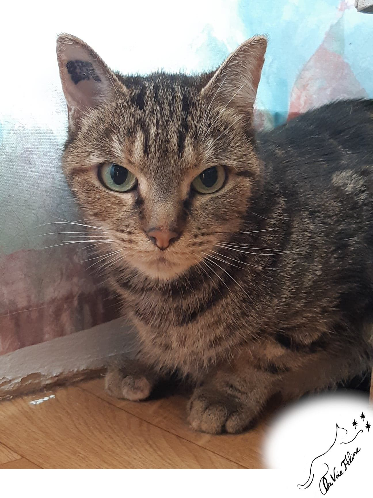 Féline - Adopter un chat – Ile de France