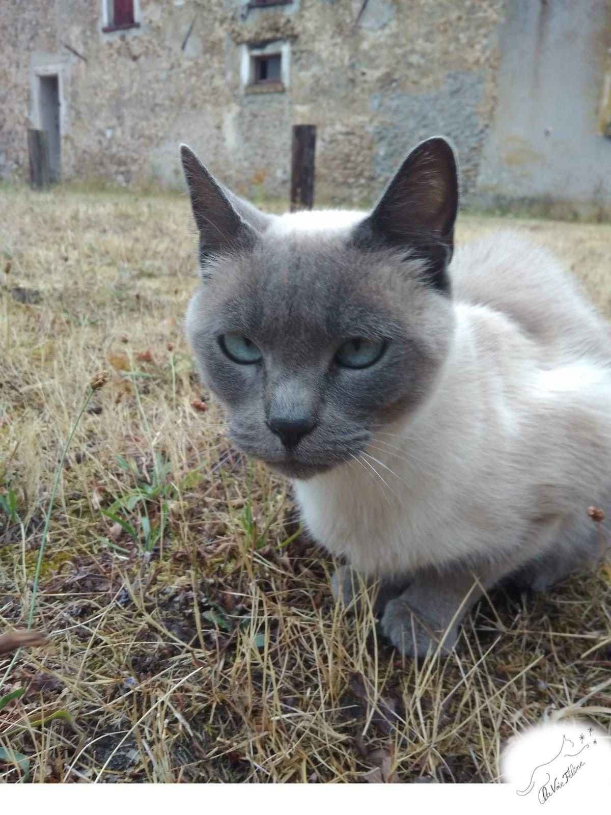 Iris - Adopter un chat – Ile de France