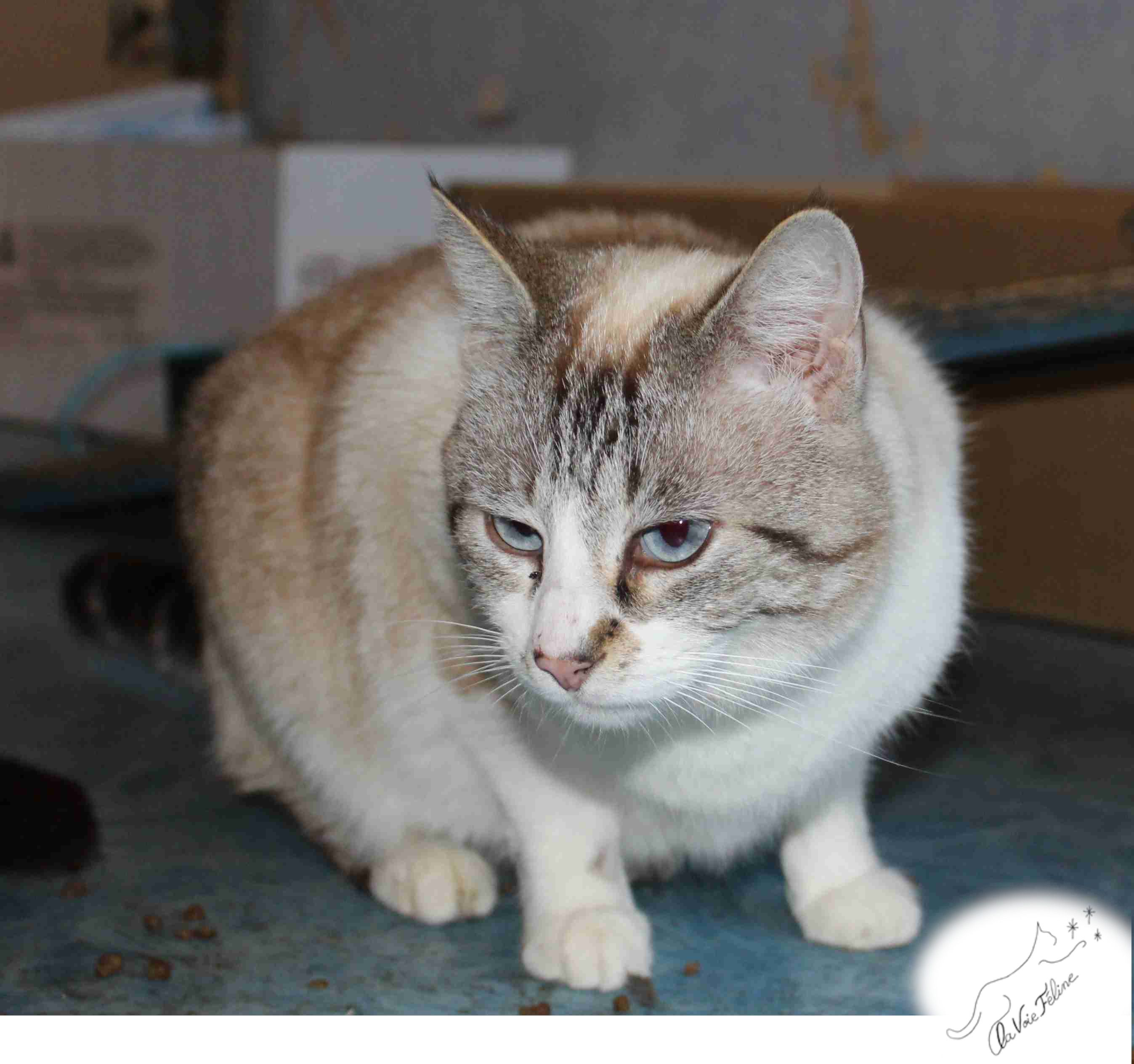 Brandy - Adopter un chat – Ile de France