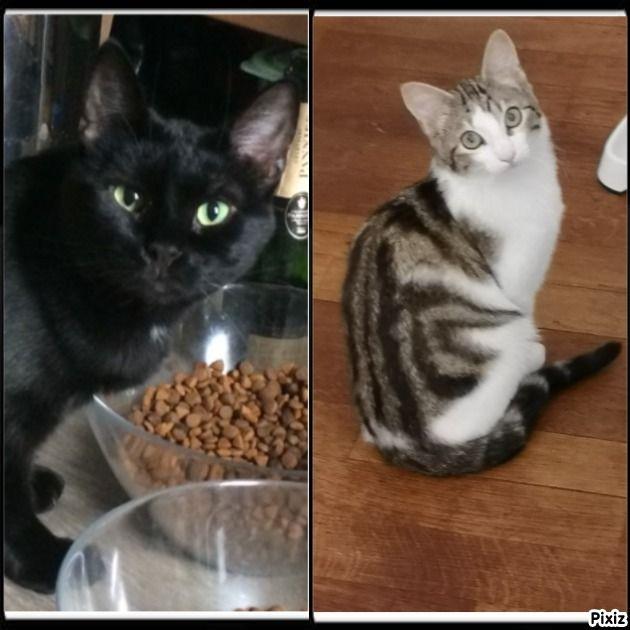 Alphonse et Benjy - Adopter un chat – Ile de France