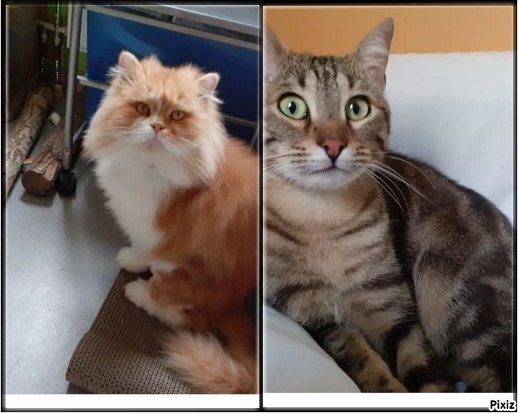 Kero et Jiraya - Adopter un chat – Ile de France