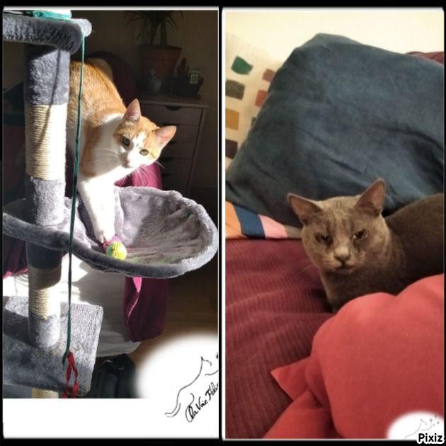 Aïda et Sonate - Adopter un chat – Ile de France