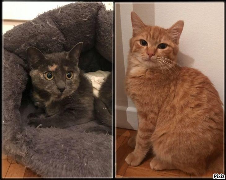 Lester et Lyra - Adopter un chat – Ile de France
