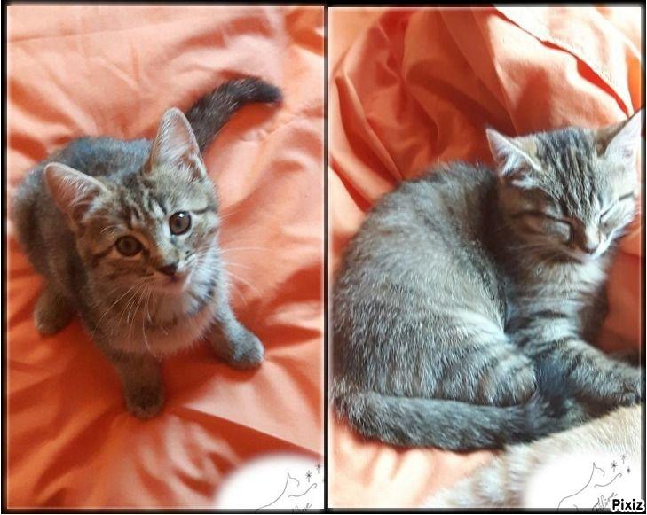 Romy et Rubis - Adopter un chat – Ile de France