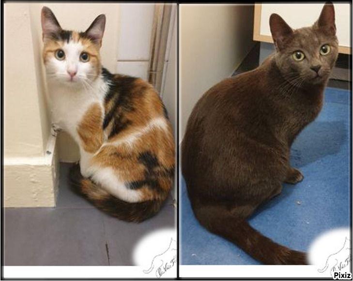 Suzette et Piadora - Adopter un chat – Ile de France