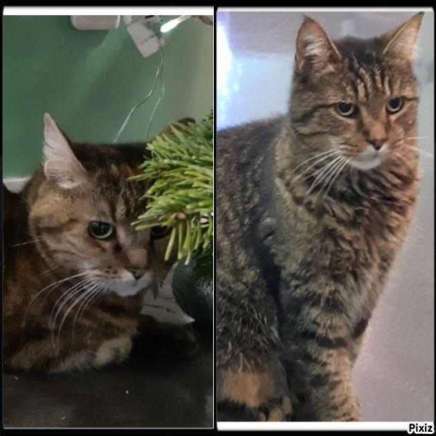 Felix et Minette - Adopter un chat – Ile de France