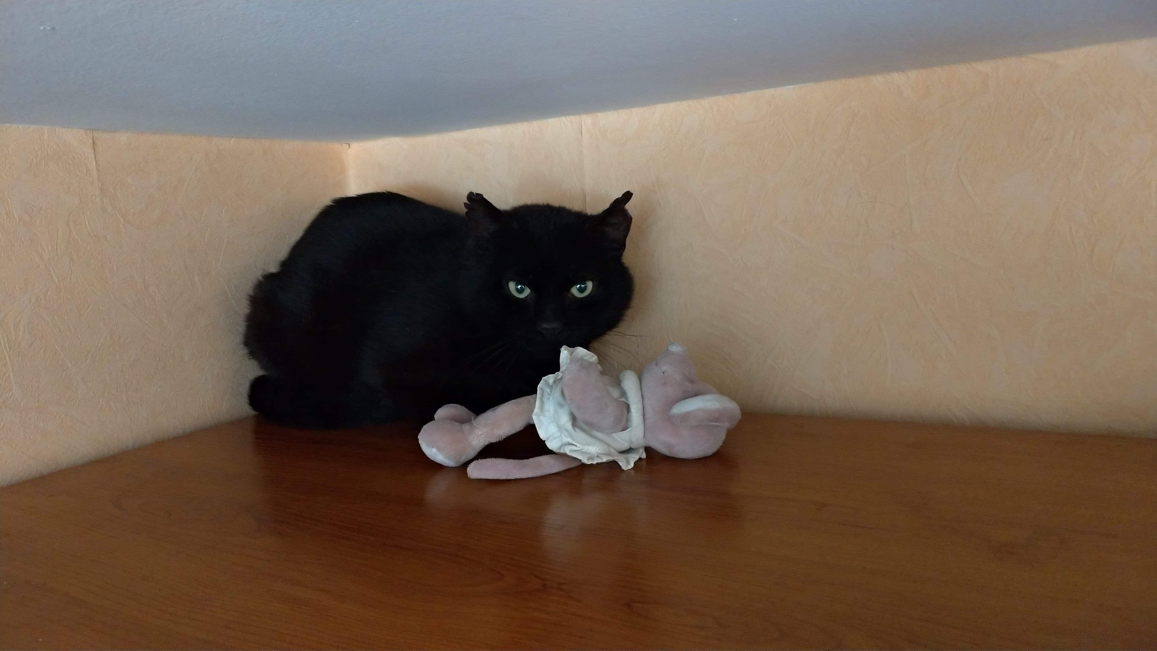 Liam - Adopter un chat – Ile de France